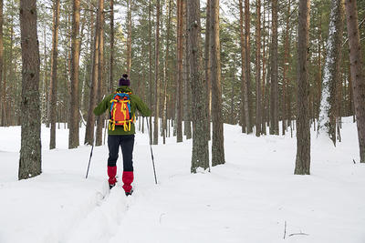 Cross-country Skiing envelops you in winter sounds and sights.