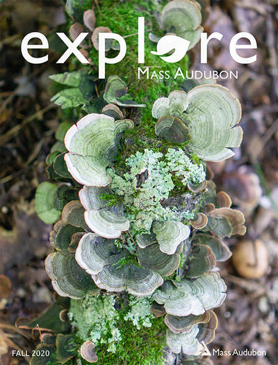 "Cover of ""Explore"" Fall 2020 issue (multi-colored fungi on a log)"