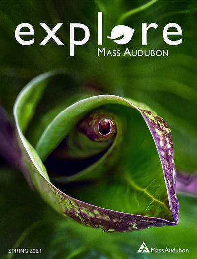 "Cover of ""Explore"" Spring 2021 issue (Macro close-up of skunk cabbage © James Doucett)"