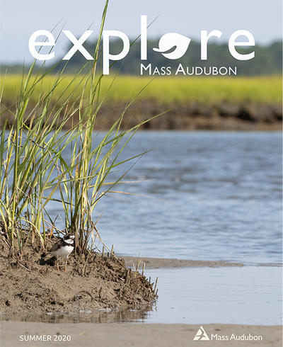 "Cover of ""Explore"" Summer 2020 issue (Semi-palmated Plover at Westport River)"
