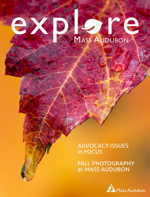 "Cover of the Fall 2018 issue of ""Explore"" (Maple Leaf © Jim Feroli)"