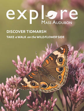 Explore Spring 2017 cover with common buckeye © Nathan Dubrow