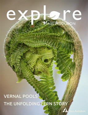 Cover of Explore Spring 2018 (Fiddlehead fern © Lucy Loomis)