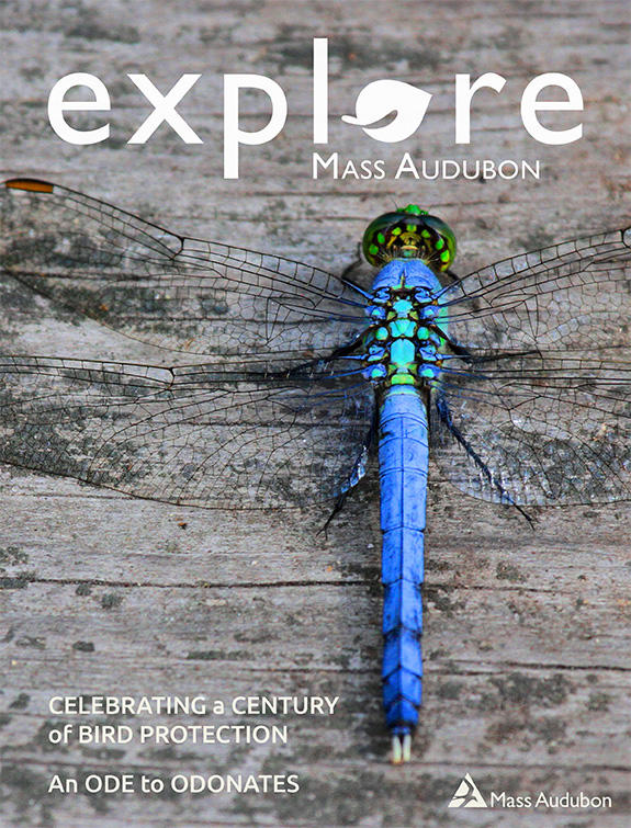 "Cover of the Summer 2018 issue of ""Explore"" (Eastern Pondhawk, Erythemis simplicicollis © Kim Nagy)"