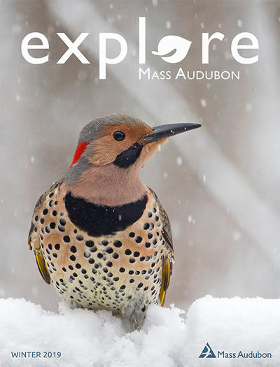 Explore Winter 2019 cover (Northern Flicker © Cheryl Rose)