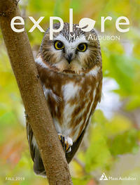 "Saw-whet Owl on the cover of Fall 2019 issue of ""Explore"""