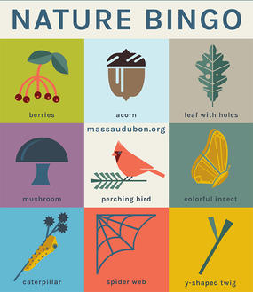 Mass Audubon Bingo Card - Nature Bingo #2