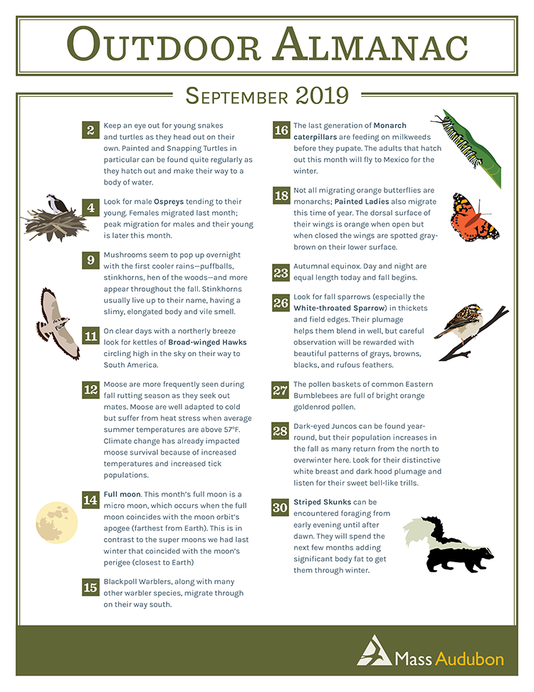 Outdoor Almanac - Summer 2019 - September