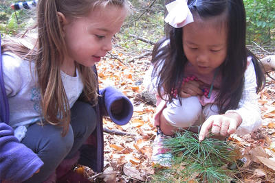 Preschoolers find evergreen sapling on trail