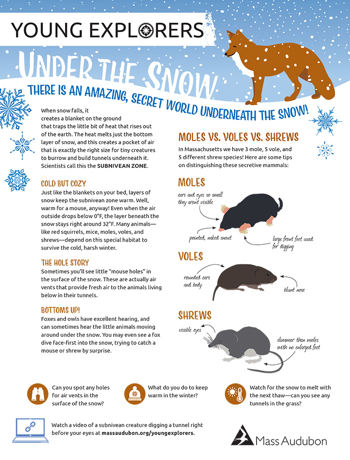 Young Explorers - Under the Snow Activity Sheet