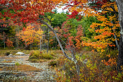 View looking towards the heron rookery at Rocky Hill in fall (Ryan Helen Dorsey/,Mass Audubon)
