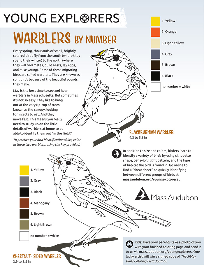 Warblers By Number Activity Sheet