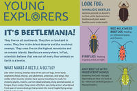 It's Beetlemania! Activity Sheet - Summer 2019