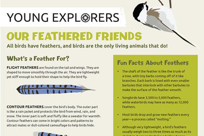 Our Feathered Friends Activity Sheet - Spring 2019