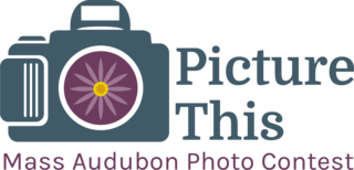 Picture This Photo Contest Logo 2019