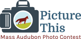 """Picture This"" Photo Contest 2020 logo"