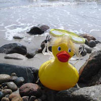 Allens Pond Duck Derby rubber duck with goggles