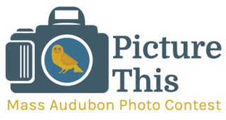 Photo Contest 2017 Logo
