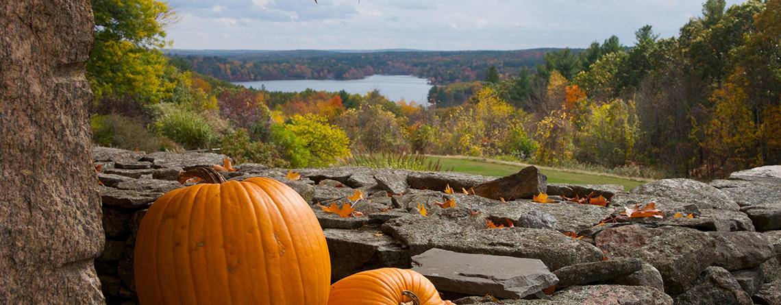 Pumpkins on a stone wall overlooking a forest in fall © MartyJo Henry