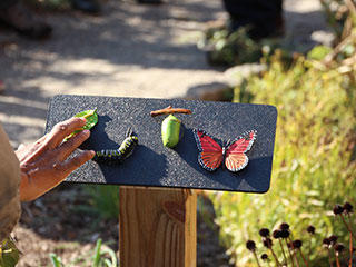 A Sensory Trail sign about butterfly life cycles