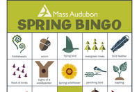 MA Nature Bingo Card - Spring #1