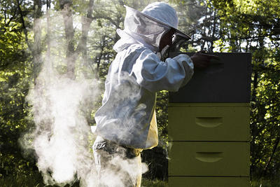 Beekeeper checking a hive in Norfolk MA © Toby Finke