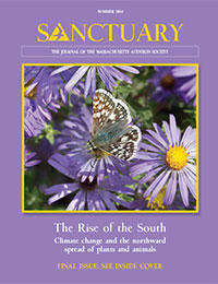 Mass Audubon Sanctuary Magazine Summer 2014