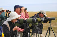 Birders using scopes at Wellfleet Bay Wildlife Sanctuary