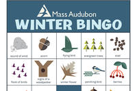 Mass Audubon Nature Bingo - Winter