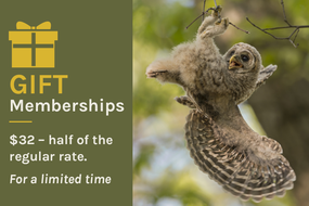 Give a Gift Membership for just $32 - ends November 30!