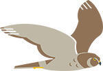 Northern harrier icon