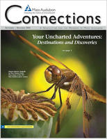 Connections Fall 2012 cover