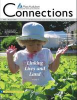 Connections newsletter summer 2013