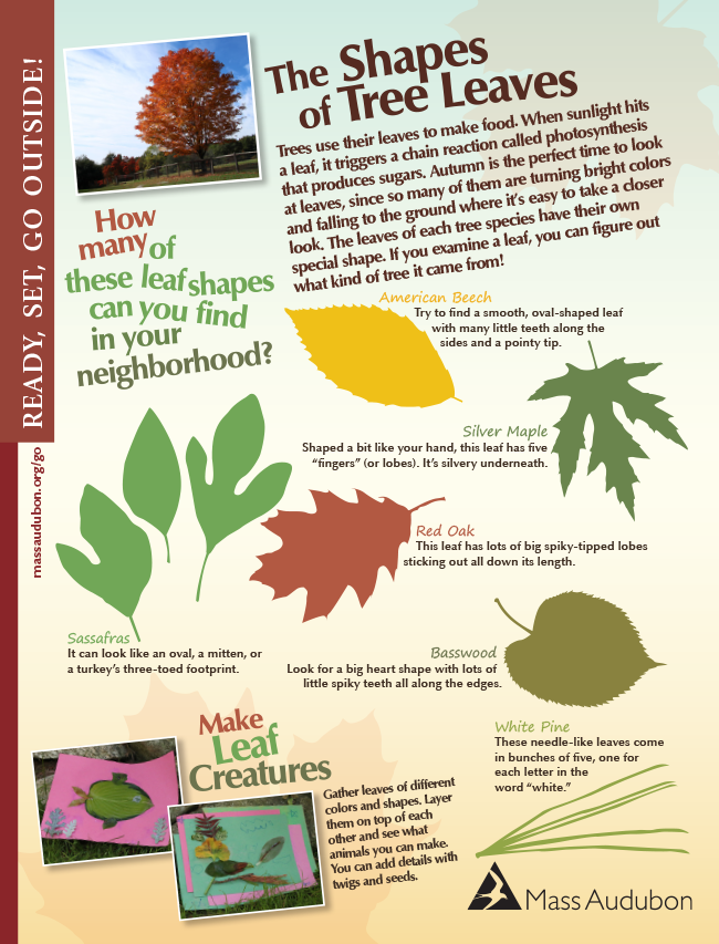 Shapes of tree leaves activity page