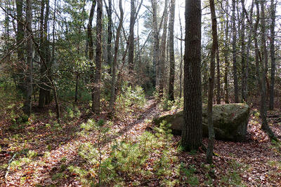 Stump Brook Wildlife Sanctuary