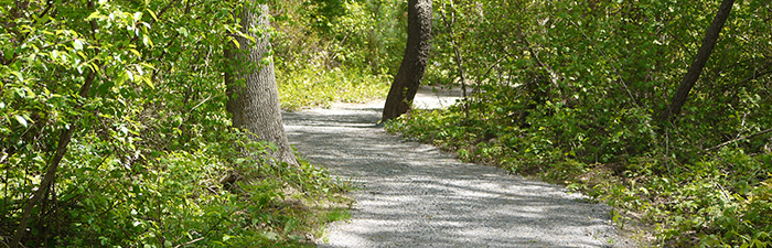 Trail at North River Wildlife Sanctuary