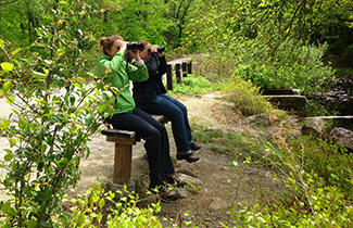 Birders on a benc (Image by Kristen Foresto)