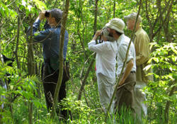 Adult group birding at Mass Audubon Arcadia Wildlife Sanctuary