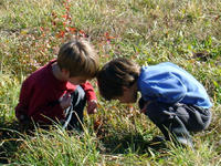Two boys observing nature at Mass Audubon Arcadia Wildlife Sanctuary