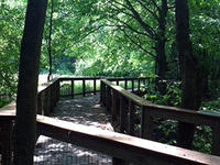 Boardwalk at Arcadia Wildlife Sanctuary