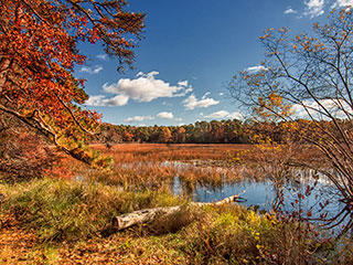 landscape view of Ashumet Holly Wildlife Sanctuary © Ronald Reynolds