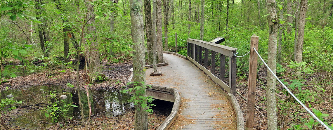 Sensory trail at Attleboro Springs Wildlife Sanctuary (Photo: Rosemary Mosco)