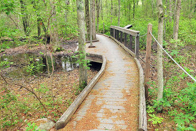 Trail to vernal pool at Attleboro Springs Wildlife Sanctuary