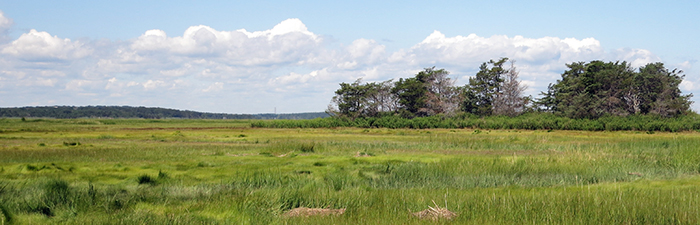 View of the marsh at Barnstable Great Marsh Wildlife Sanctuary