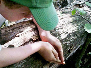 Child exploring nature at Blue Hills Trailside Museum