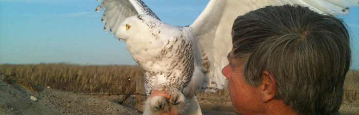 Norman Smith holding a snowy owl