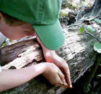 Boy looking at an insect