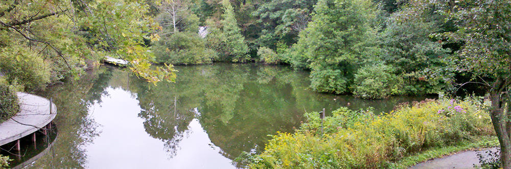 View of the pond from Trailside auditorium