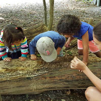 Preschoolers exploring at the Boston Nature Center