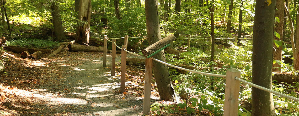 Sensory trail at Broad Meadow Brook Wildlife Sanctuary